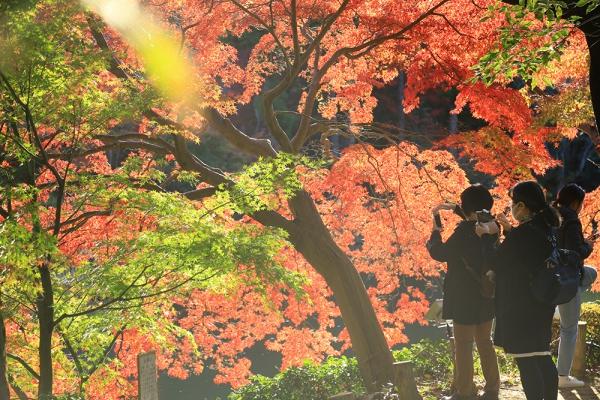 薬師池の紅葉