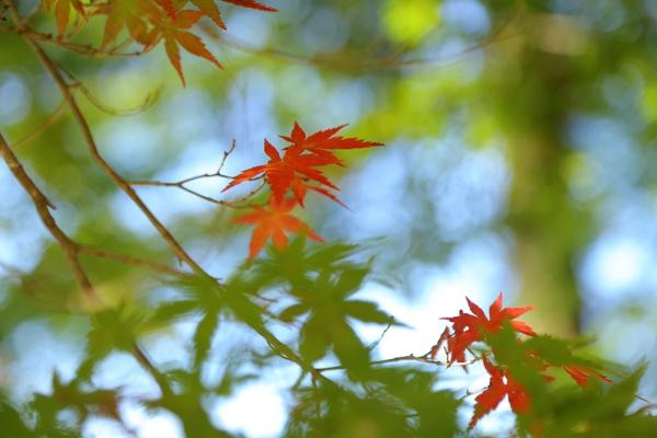 薬師池紅葉